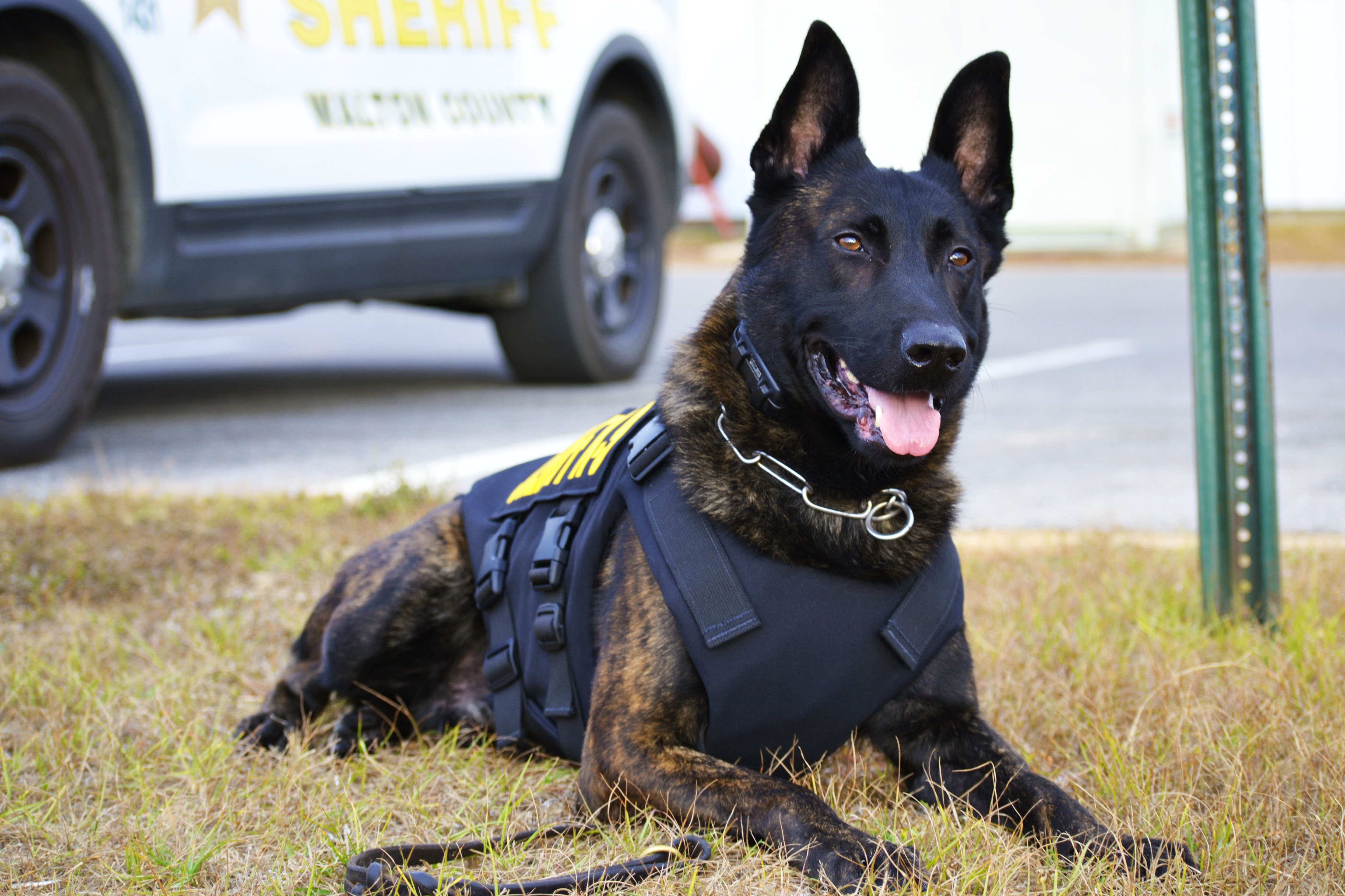 "WALTON COUNTY SHERIFF'S OFFICE K9 ""DRAGO"" RECEIVES BODY ARMOR IN HONOR OF THOSE LOST IN ORLANDO"